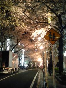 Sakura_oben
