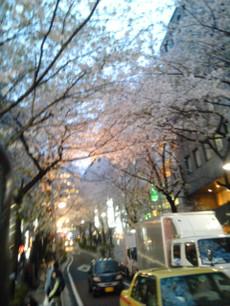 Sakura_unten